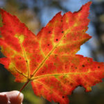 Autumn Energy Yoga Mindfulness – how to vibe this season