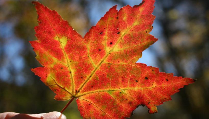 Autumn Energy Yoga Mindfulness – how to vibe this season